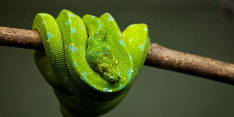 Python3 Installation
